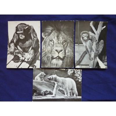 Zoo Praha - soubor černobílých pohlednic