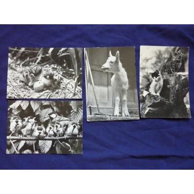 Zvířata - sada černobílých pohlednic
