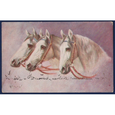Německo - pohlednice Koně 1927