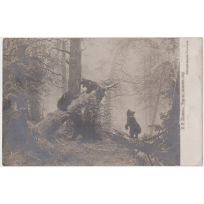 Russia - postcard Bears 1909