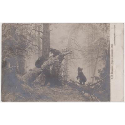 Russland - Postkarte Bären 1909
